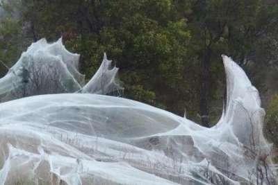 Страшно красиво: деревья, дороги и поля в австралийском штате Виктория покрыты паутиной